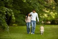 Dog friendly luxury cottages