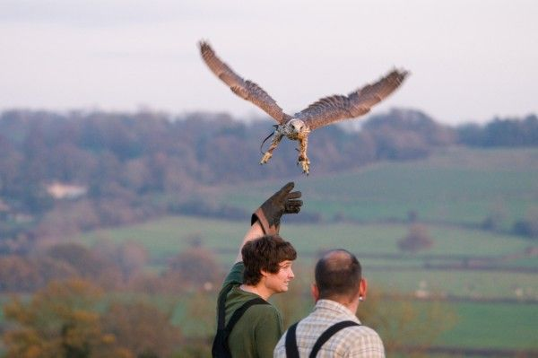Try your hand at Falconry in the grounds