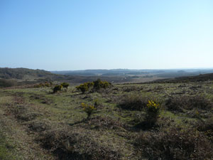 Heathlands in the New Forest