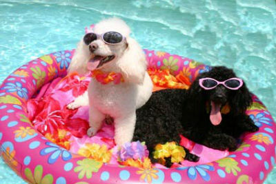 Dog-Friendly Swimming Pool
