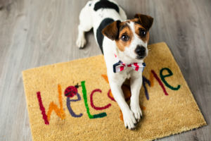 Dogs Welcome Holiday Lodge